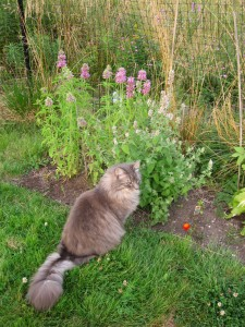 Frank visiting the catnip
