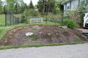 June 12 - After planting